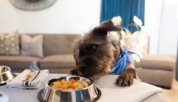Fairmont Miramar Hotel & Bungalows Welcomes Furry Friends with New Package
