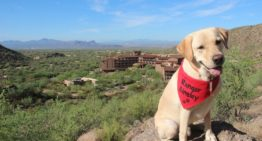Meet Ranger Ainsley, The Ritz-Carlton, Dove Mountain's Newest Ambassador