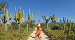American Airlines Introduces New Direct Flights to <br>Eco-Beach Destination La Paz, Mexico