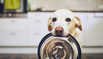 Feasts and Fido: What's Safe for Pets to Eat This Holiday Season