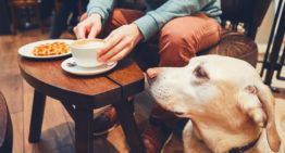 Pet-iquette For Dog-Friendly Patios