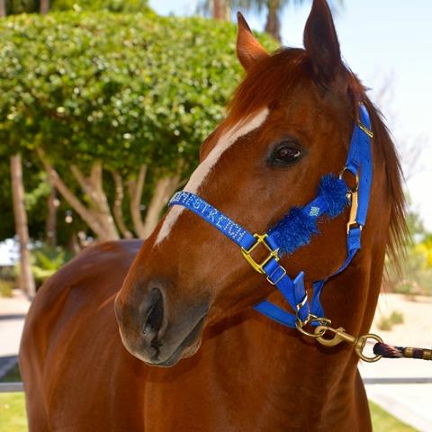 Horse_3_Derby_day_2014 - 038