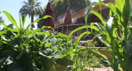 Farm-to-Table Dining at Rico's in Phoenix
