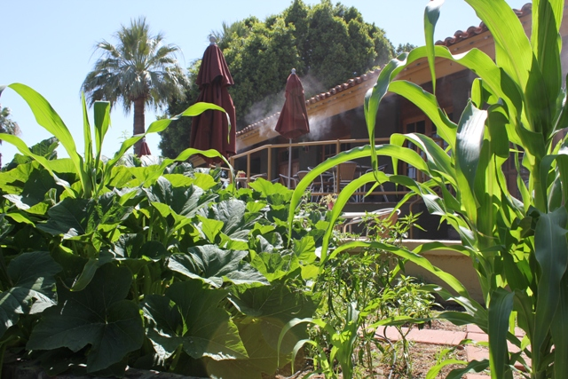 Ricos Garden 2