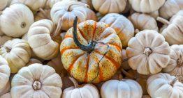 Recipe: Pumpkin Soup