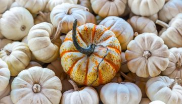 Recipe: Pumpkin Soup
