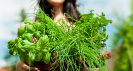 6 Must-Have Herbs for Your Garden