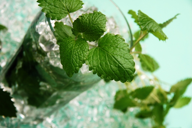 mojito-photo-credit-omnibrain