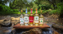 El Tequileño Launches in Arizona at Total Wine and Spirits