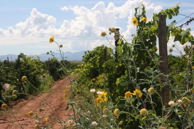 Arizona Wine Growers Festival at The Farm