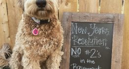 Dogs are Posting New Year Resolutions on Instagram and it's Hilarious