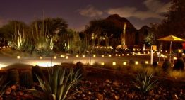 Las Noches de las Luminarias Lights Up the Desert Botanical Garden