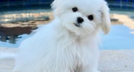 Meet The Valley's Cutest Dog: Coco