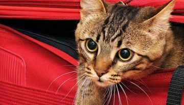 15 Tips For Traveling With Your Pet