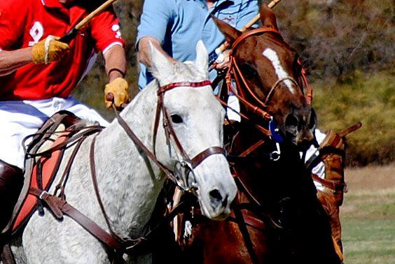 Join the Valley's Biggest Polo Event 'Horses and Horsepower'