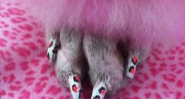 Nail Art for Your Dog