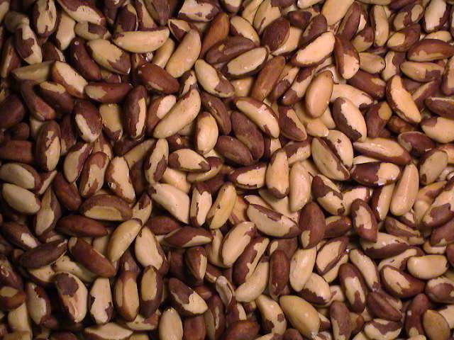 Brazil Nut 1