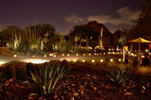 Las Noches De Las Luminarias Lights Up The Desert Botanical Garden