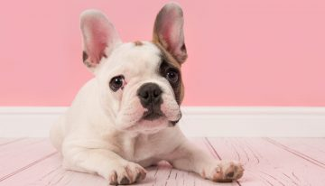 Is Your Dog Cute Enough to Win $500?