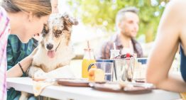 Brunch with Your Pup for a Good Cause on Saturday, February 9