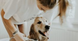 Pet Project: How to Help Your Furry Friend Adjust When You're No Longer Home All the Time