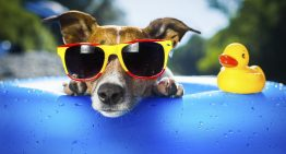 Calling All Cute Canines for AZ Foothills Dog Days of Summer 2014 Contest!