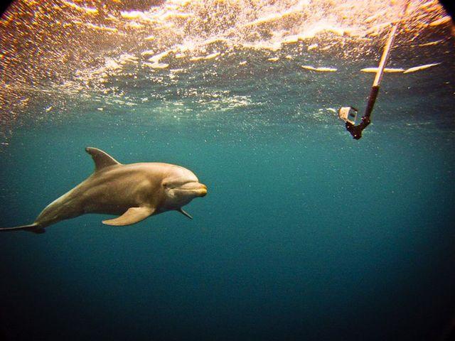 gopro-dolphin-hd-video1