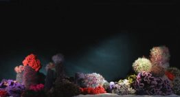 Scottsdale Hosts World-Renowned Crochet Coral Reef