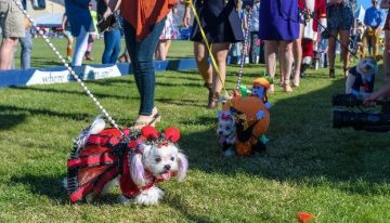 The Fur Baby Fashion Show You Can't Miss